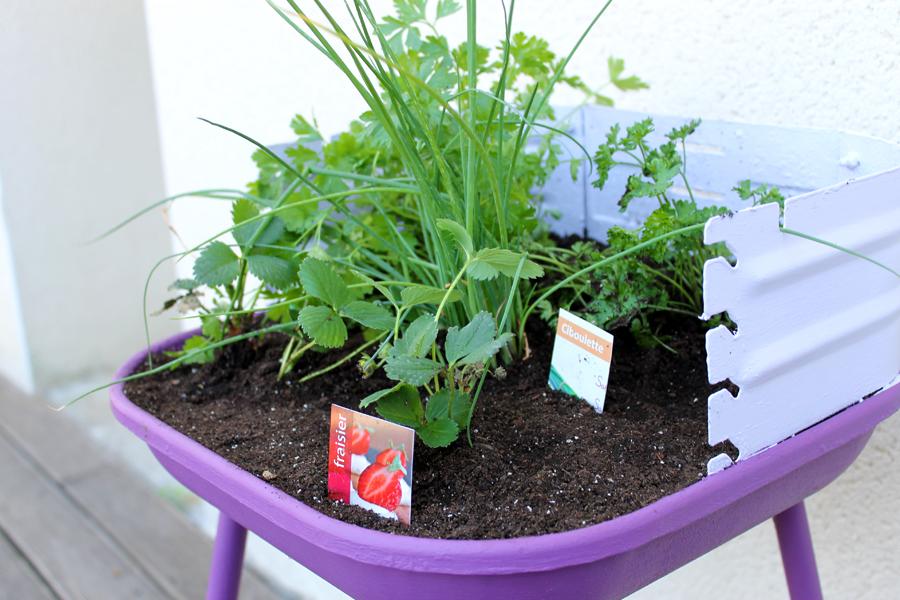 plantes pour mini potager