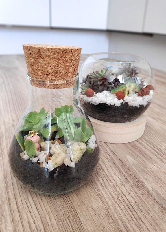 mini terrarium dans un verre