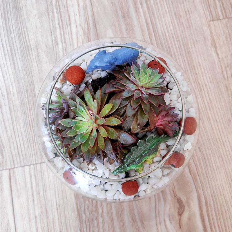 DIY création d'un terrarium
